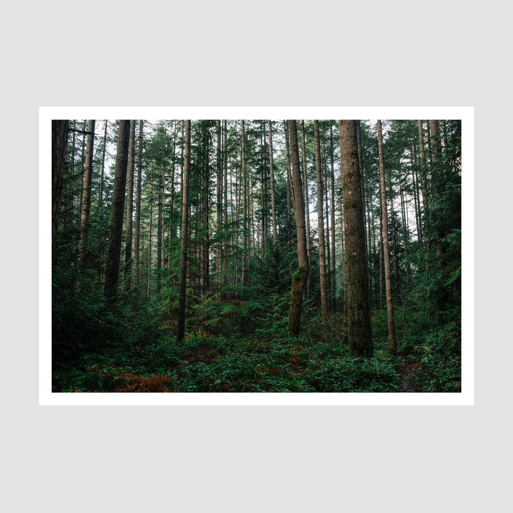 IMG_D87A7288 - Web framed .jpg