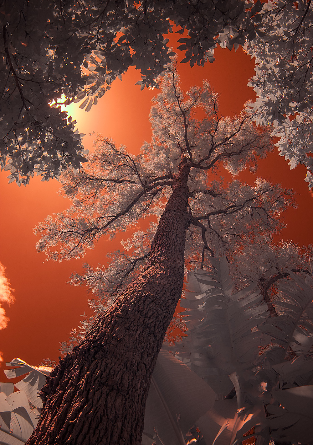 FW_2_Infrared tree.jpg