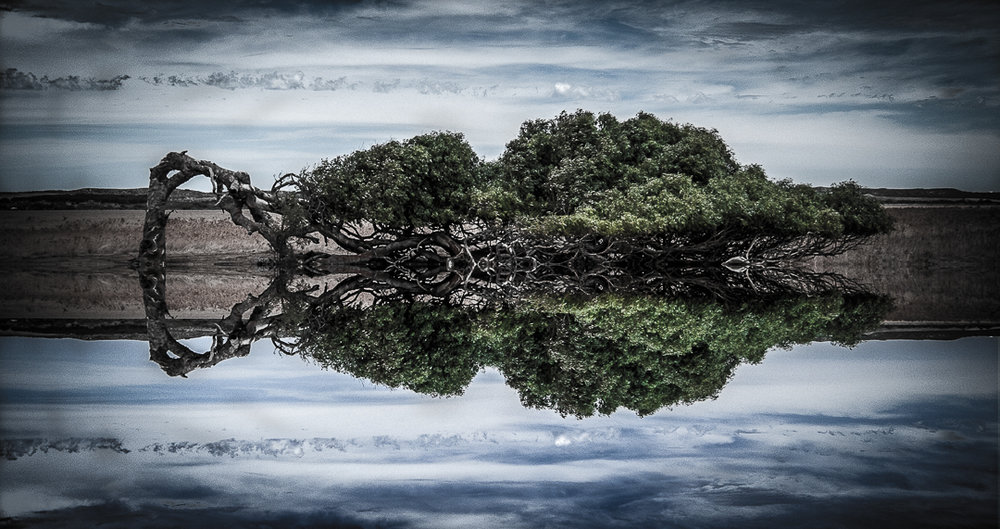 Dan Negus Challenge #1  - 02 Lone Tree.jpg