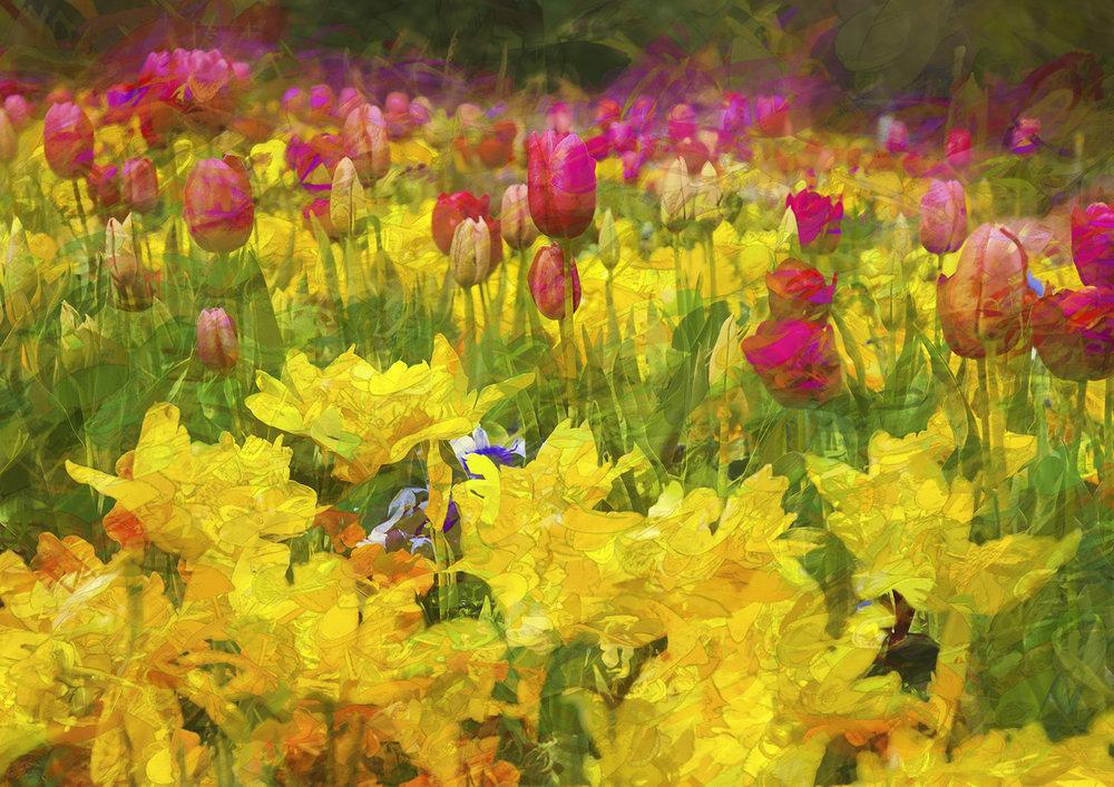 Tulips 3.jpeg