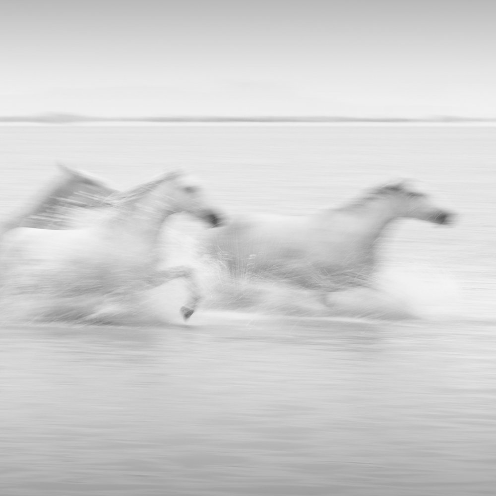30Day#11_TheCamargue_20180522_2030A.jpg