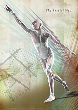 Fascia Posters [A]by Robert Schliep PhD available at fasciadvds.com. See a short movie about these posters here.