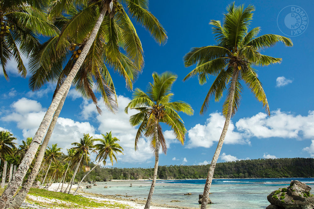 A palm tree-filled beach in Vava'u, Tonga. This might make a good t-shirt design!