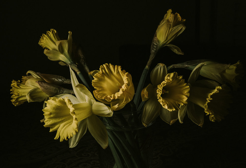 Daffodils 2.jpg