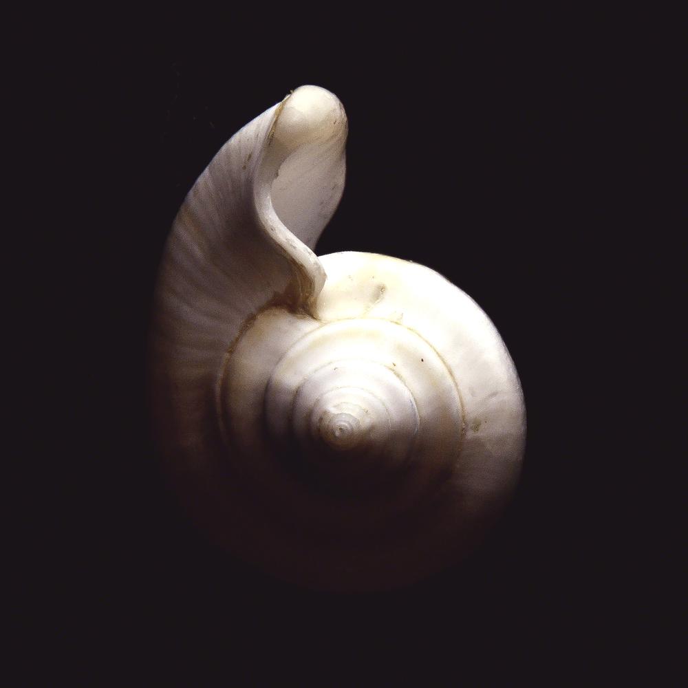 Shell Study #4