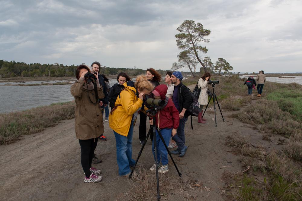 Birdwatching at Karavasta Lagoon,Divjaka-Karavasta National Park, photography Alketa Misja, Albania April 2016