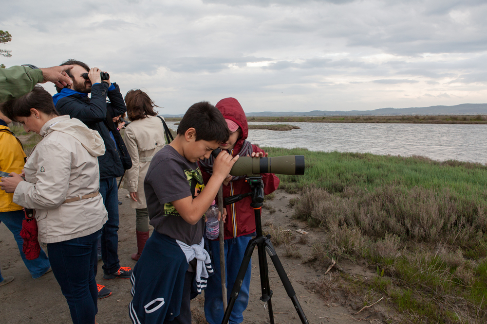 Birdwatching at Karavasta Lagoon, Divjaka-Karavasta National Park, photography Alketa Misja, Albania April 2016