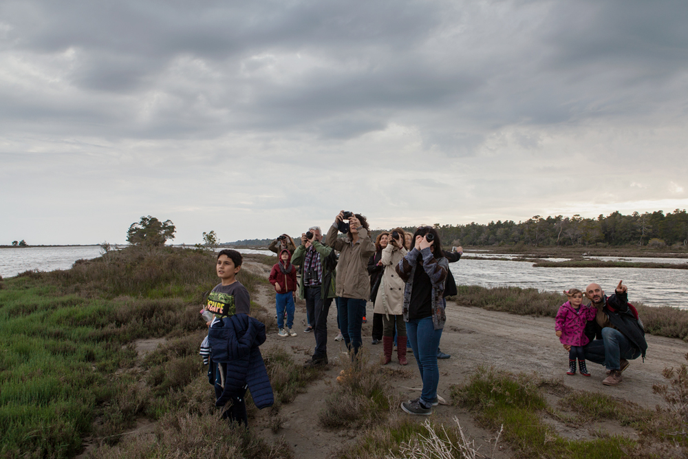 Birdwatching Karavasta Lagoon, Divjaka-Karavasta National Park, photography Alketa Misja, Albania April 2016