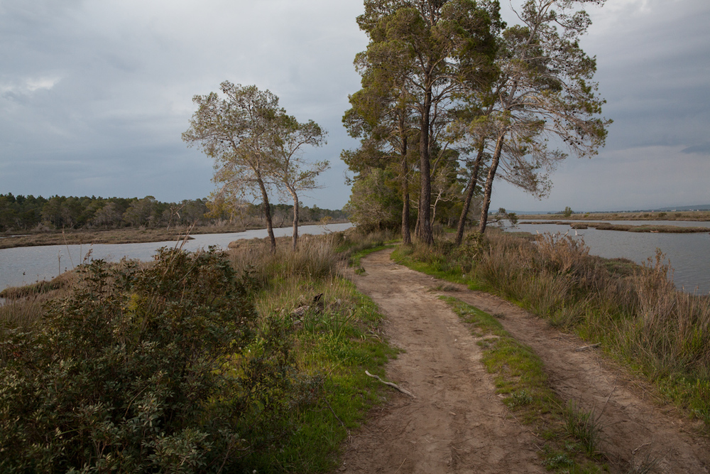 Karavasta Lagoon, Divjaka-Karavasta National Park, photography Alketa Misja, Albania April 2016