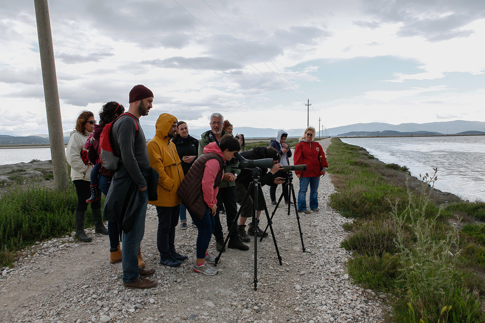 Birdwatching. Narta Lagoon and Salinas, photography Alketa Misja, Albania April 2016