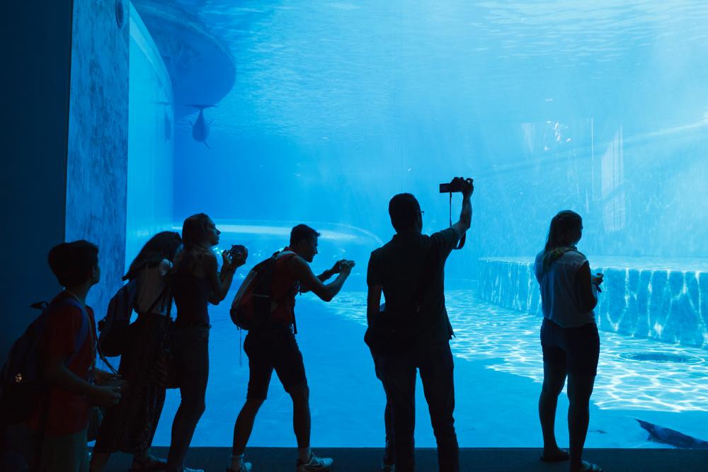 Cetaceans Pavilion.Acquario di Genova, ©alketamisja photography, August 2016