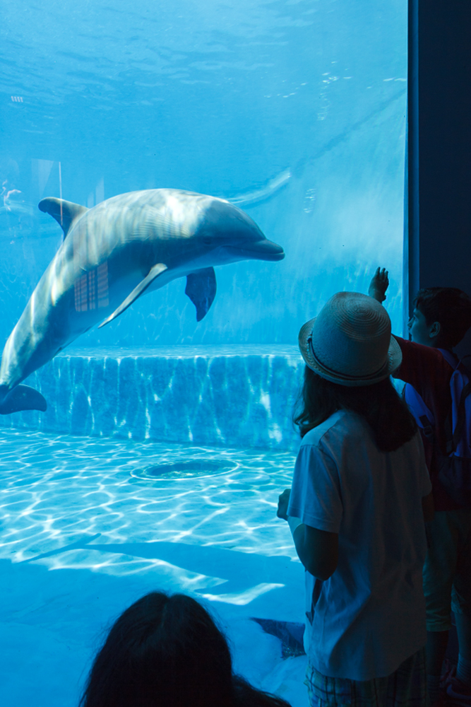 Cetaceans Pavilion. Acquario di Genova, ©alketamisja photography, August 2016