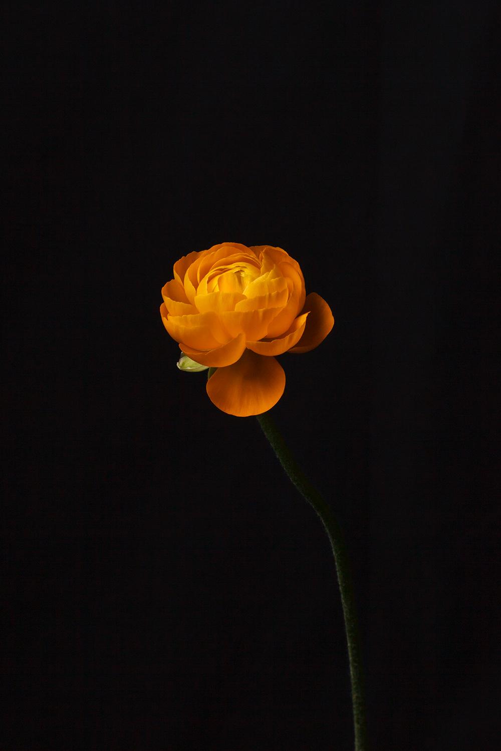 Still Life with Flower, 2009