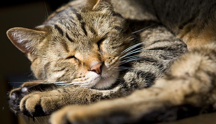blog_2009_june_kitties_0085
