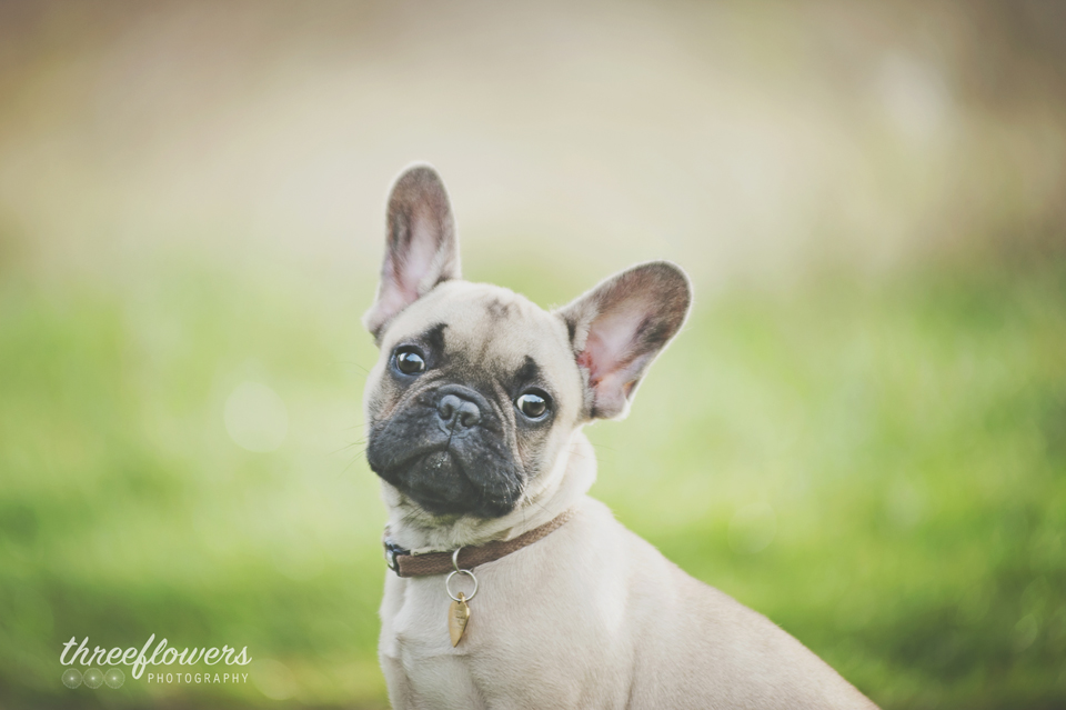 Three Flowers Photography Essex Lifestyle Photographer Puppy Dog Portrait