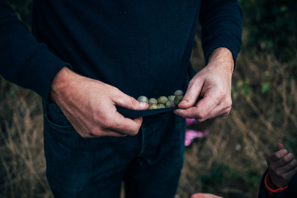 Dad holds sloes in jumper Essex UK Documentary Portrait Photographer