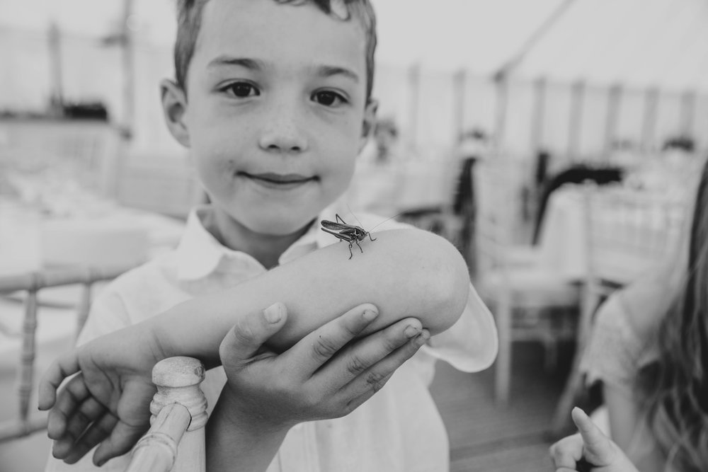 Little boy with Grasshopper on his arm.  DIY Back Garden Boho Wedding. Essex Documentary Wedding Photographer