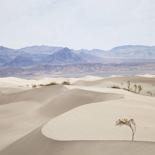 55°c #california #deathvalley #desert #mesquite