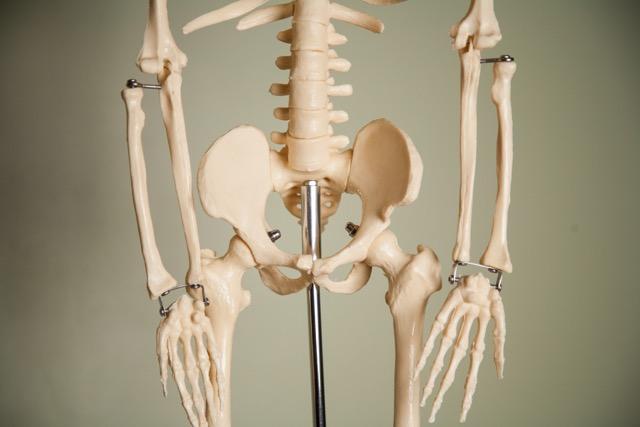 skeleton-spine-and-pelvis.jpg