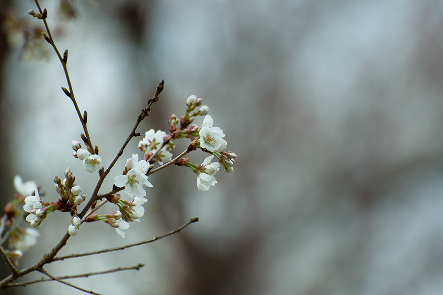 White blooming