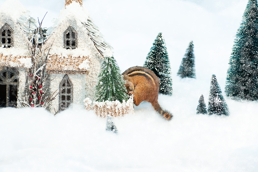 _DSC0081_Christmas_chipmunk.jpg