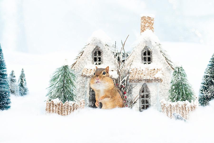 _DSC0172_Christmas_chipmunk.jpg