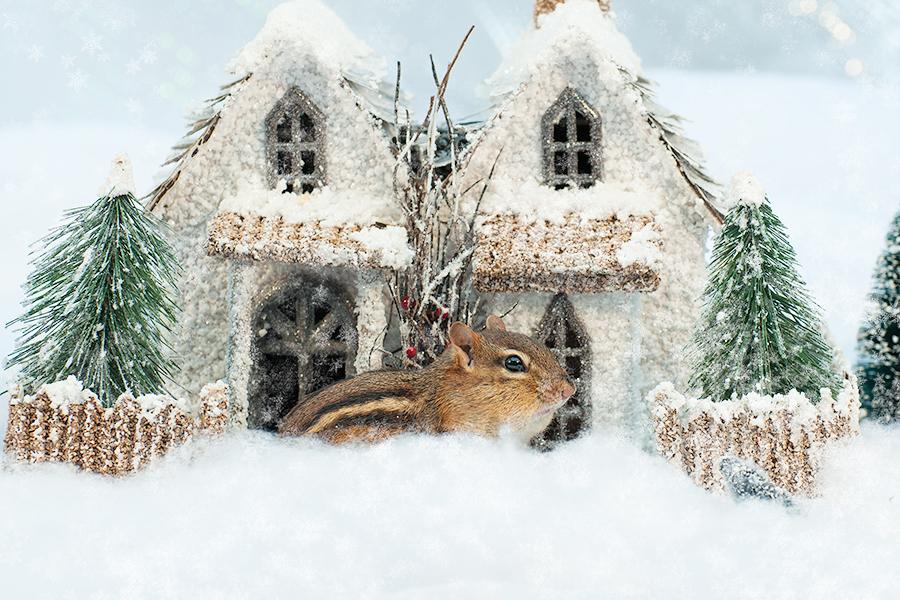 _DSC0224_Christmas_chipmunk.jpg
