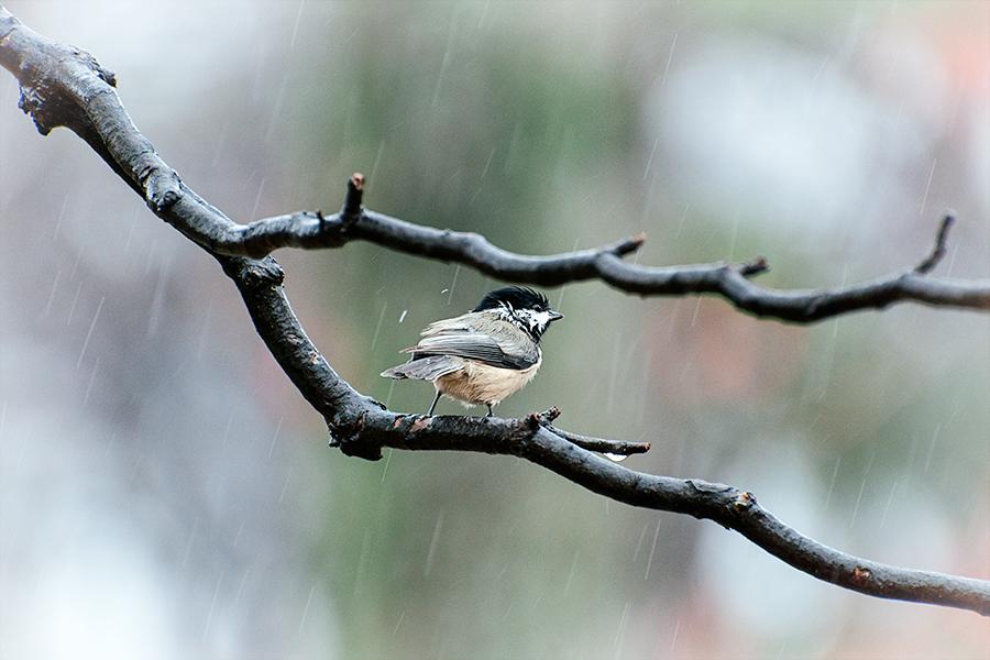 Rainy Day in Virginia