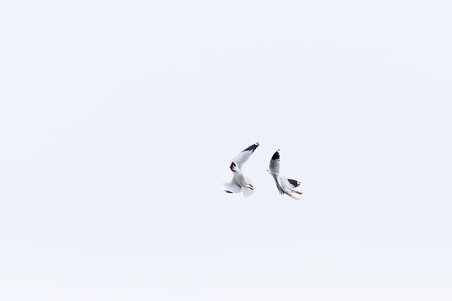 Gull's Capoeira