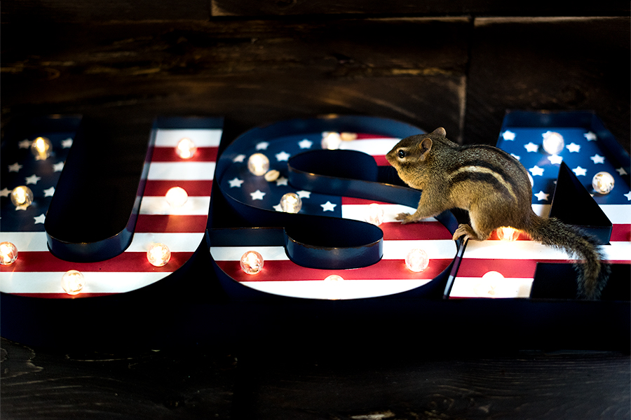 _DSC6732-usa-photoshoot-chipmunk-light-4thofjuly.jpg