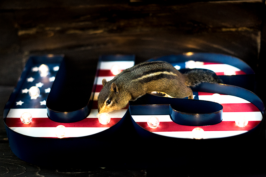 _DSC6748-usa-photoshoot-chipmunk-light-4thofjuly.jpg