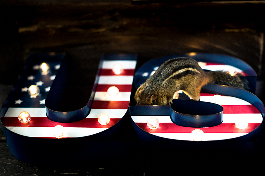 _DSC6739-usa-photoshoot-chipmunk-light-4thofjuly.jpg