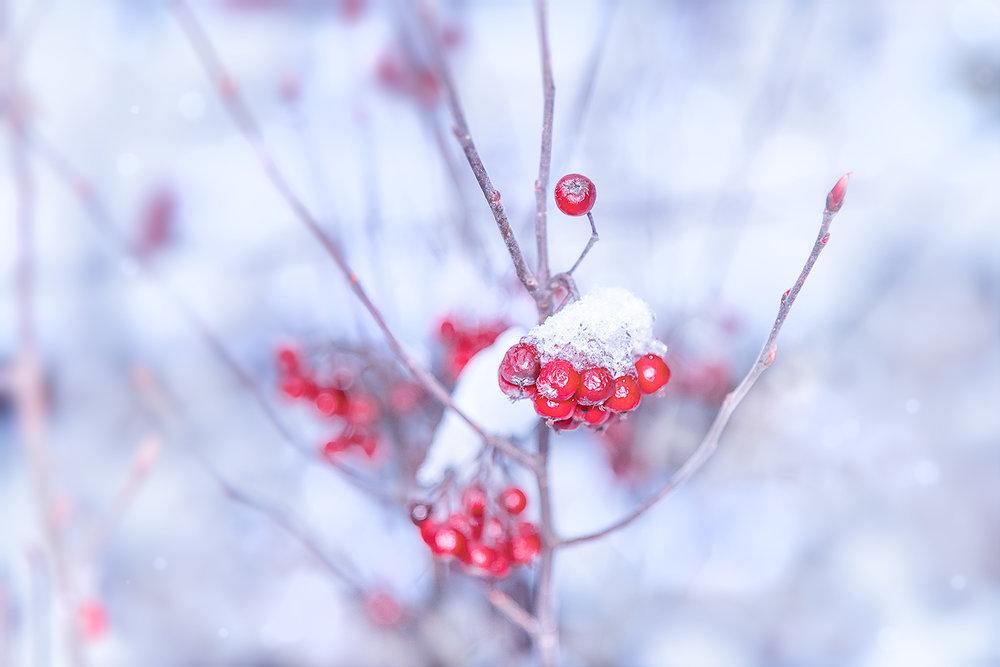 _DSC6676-red-berry-1000.jpg