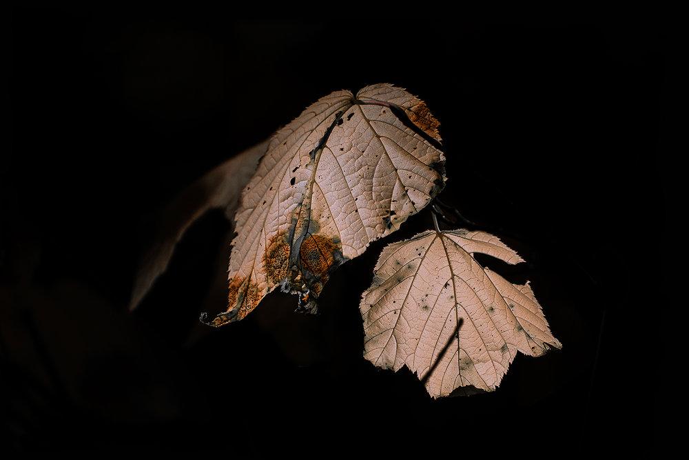 _DSC0372-autumn-leaves-1000.jpg