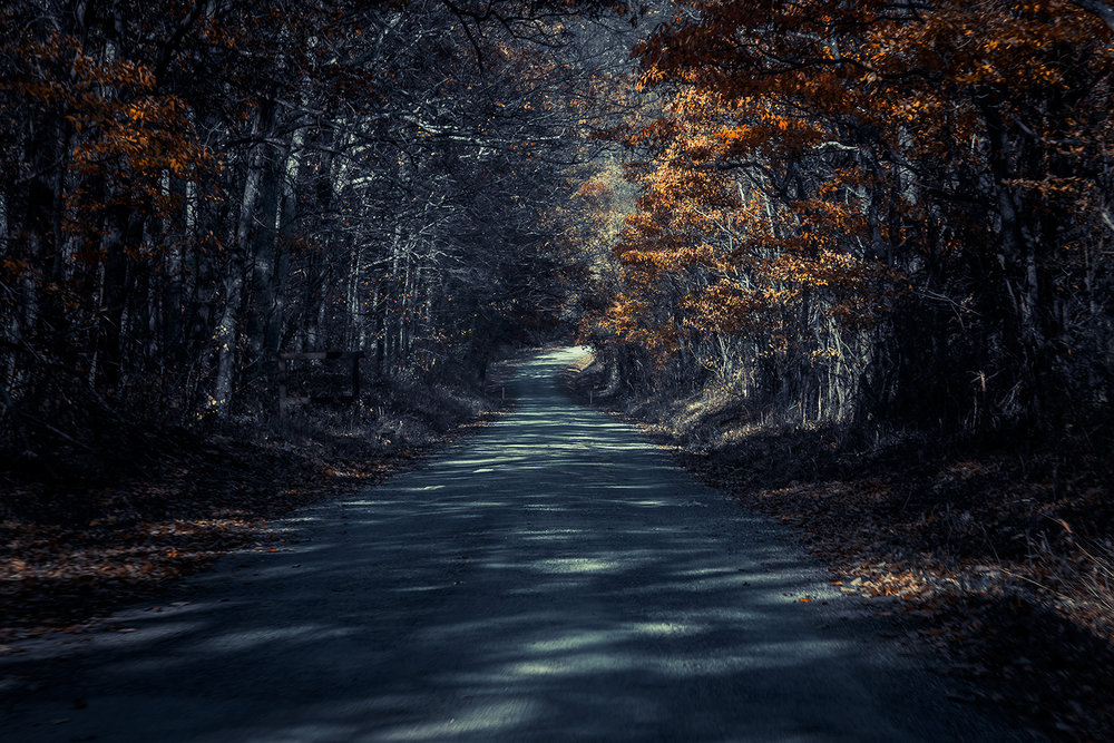 _DSC2324-dolly-sods-road-false-coloring-forest-1000.jpg