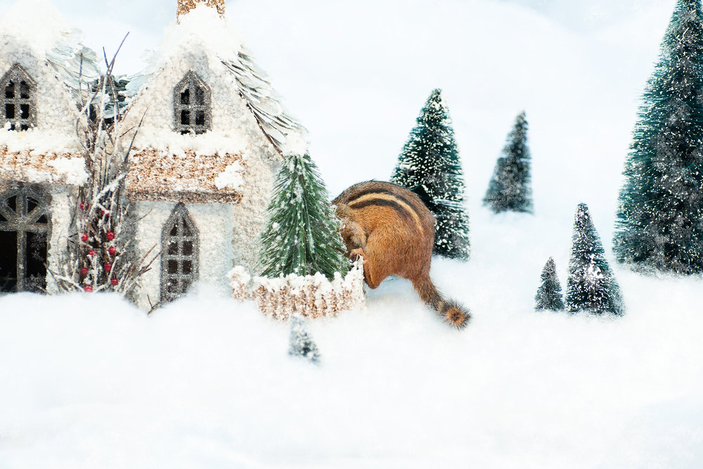_DSC0081-christmas-chipmunk-winter-wonderland-funny-snow-cute.jpg