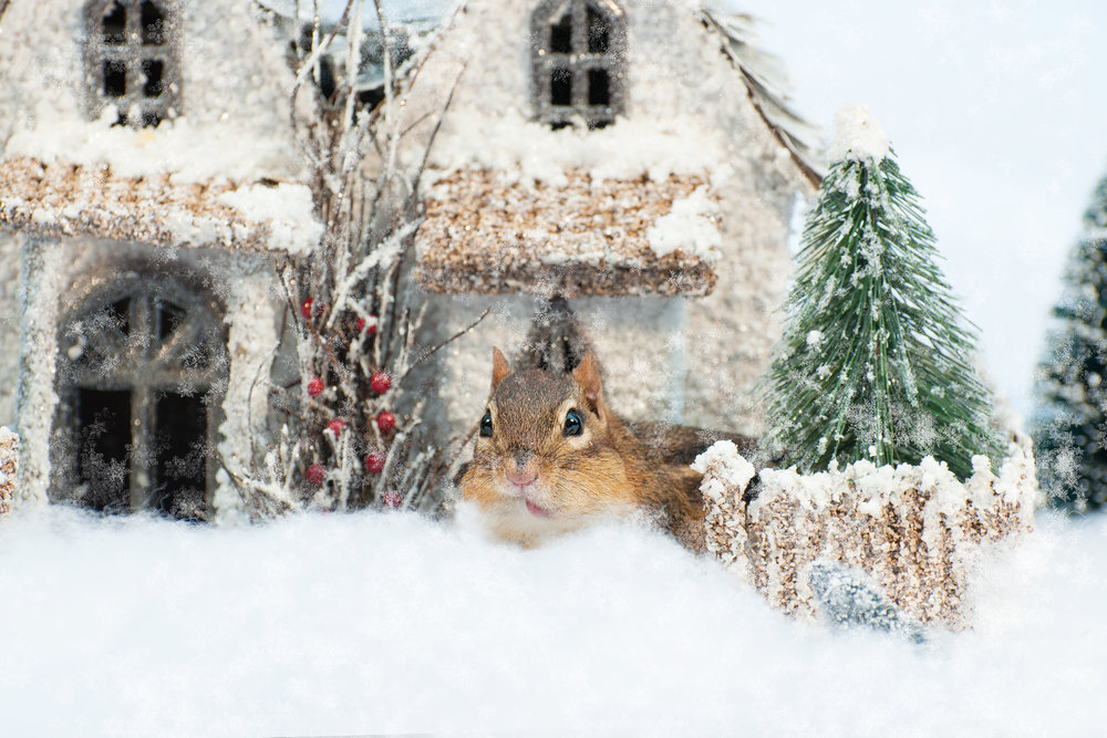 _DSC0201-christmas-chipmunk-winter-wonderland-funny-snow-cute.jpg