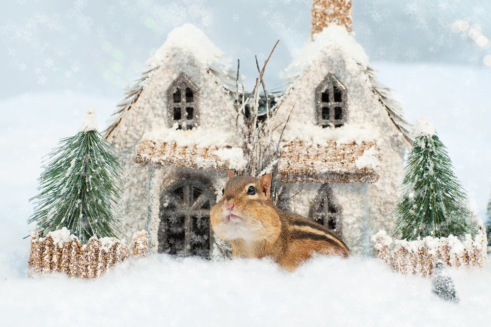 _DSC0312-christmas-chipmunk-winter-wonderland-funny-snow-cute.jpg