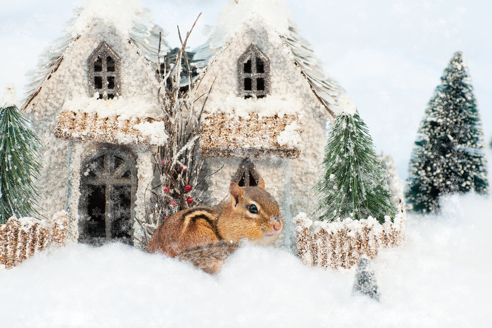 _DSC0340-christmas-chipmunk-winter-wonderland-funny-snow-cute.jpg