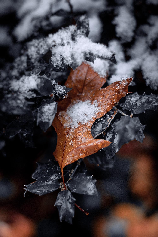 DSC_3271-leave-snow-1000.jpg