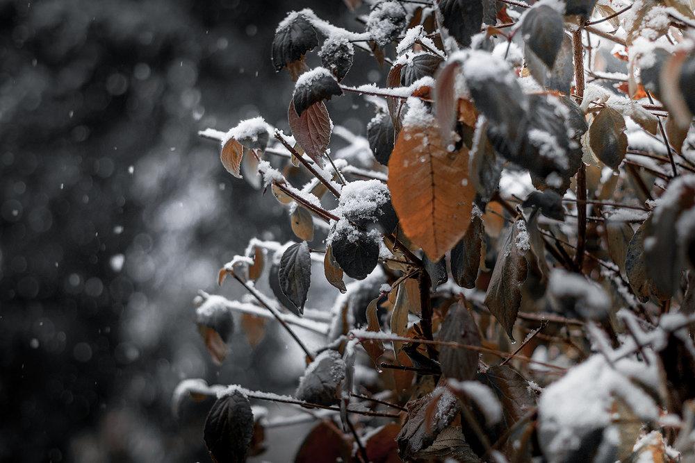 DSC_2745--snow-grey-1000.jpg