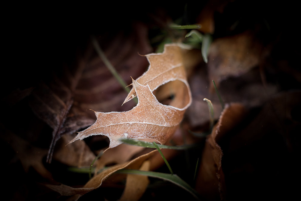 _DSC5497-morning-frost-leaf-1000.jpg