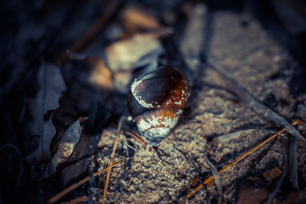 _DSC5145-snailshell-potomac-river-mason-neck-occoquan-bay-1000.jpg