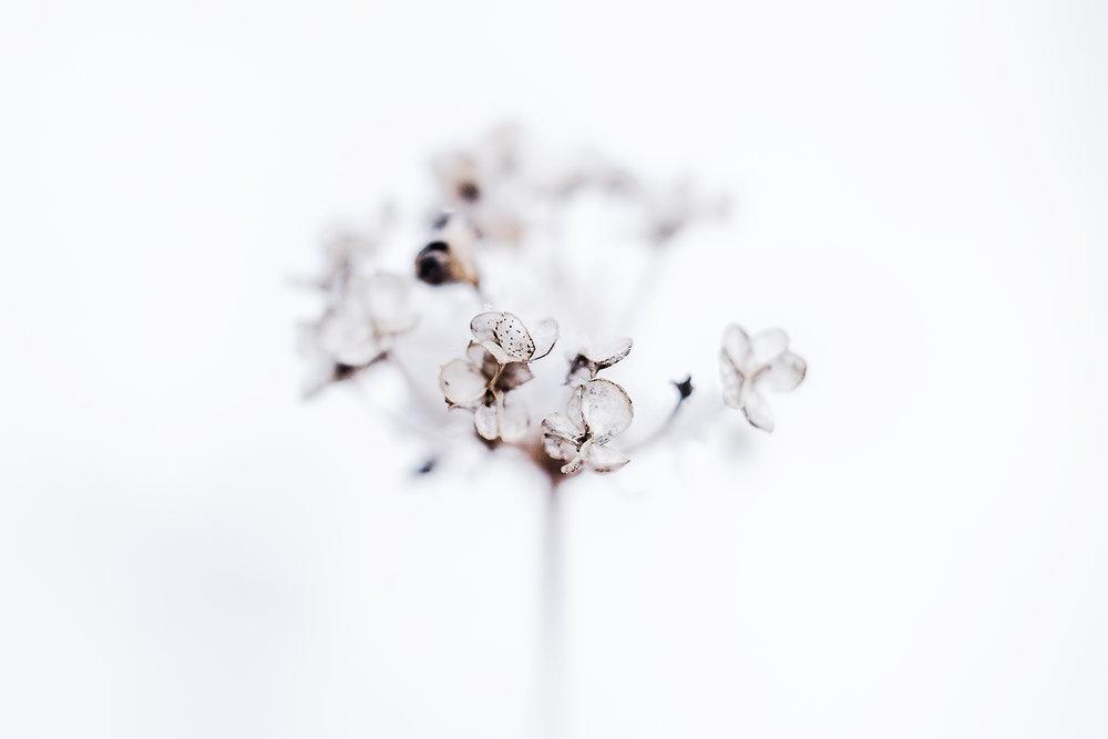 _DSC6522-winter-flower-1000.jpg