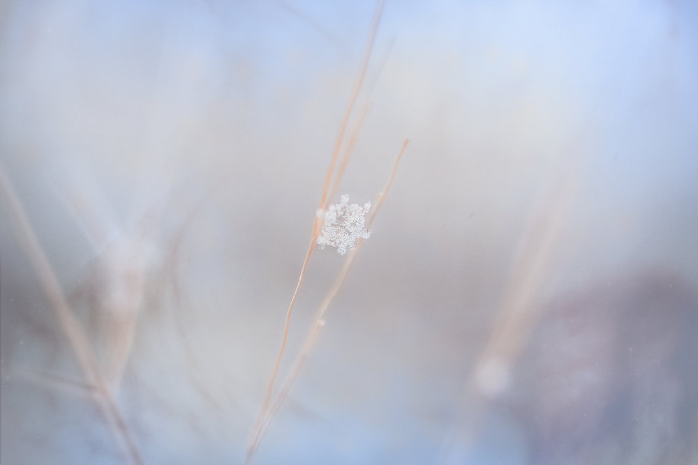 _DSC6829-snowflake-winter-macro-1000.jpg