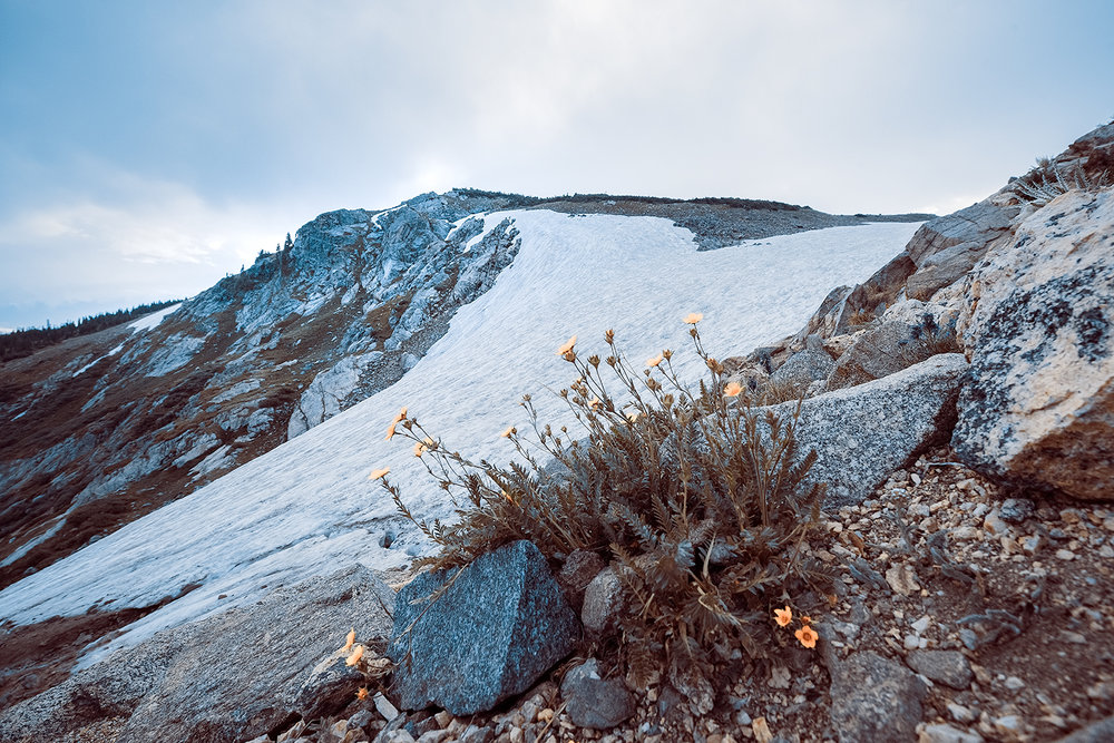 _DSC8593-Saint-Marys-Glacier-colorado-landscape-alpine-avens-flowers-1000.jpg
