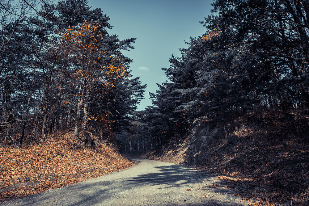_DSC2374-dolly-sods-road-false-coloring-forest-1000.jpg