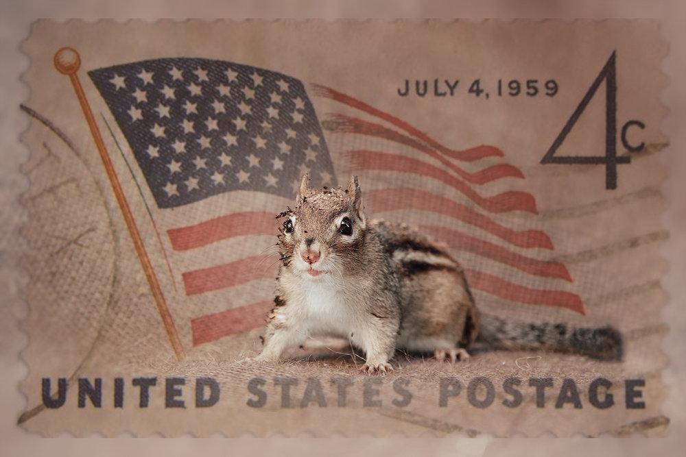 _DSC5460-chipmunk-july4th-independence-day-1000.jpg