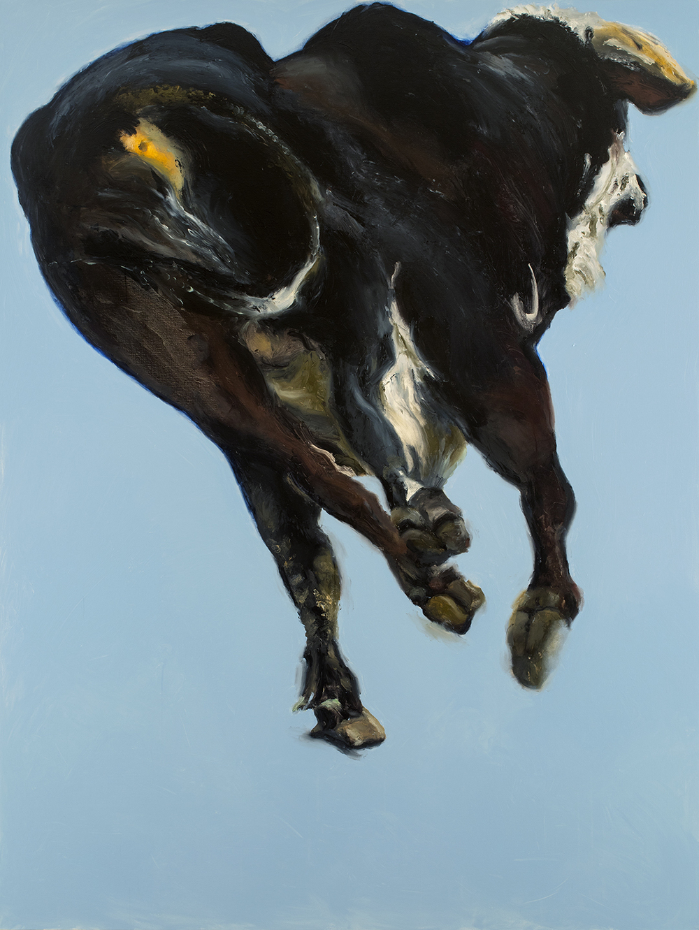 Bull with Baby Blue