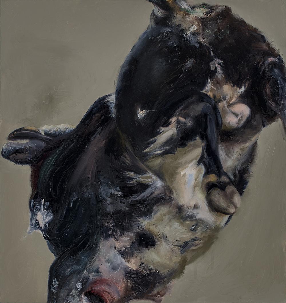 Bull with Greenish Grey